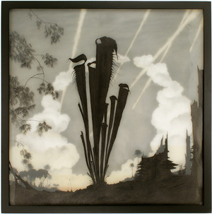 North American Pitcher Plant , Brooks Salzwedel