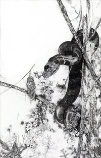 The Snake, So Youn Lee