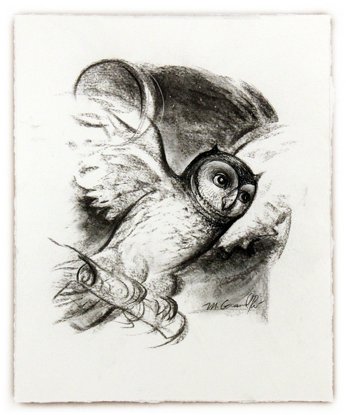Owl Sketch, Mary  Grandpré