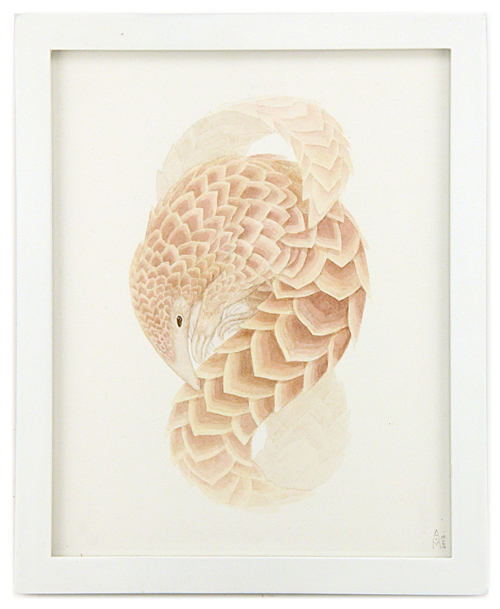 Pangolin, Ashley Mackenzie