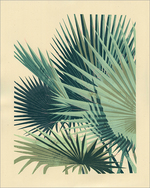 Palm Plant 1, Chris Turnham