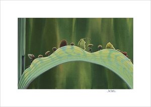 The Leaf Bridge by Tia Kratter (A Bug's Life)