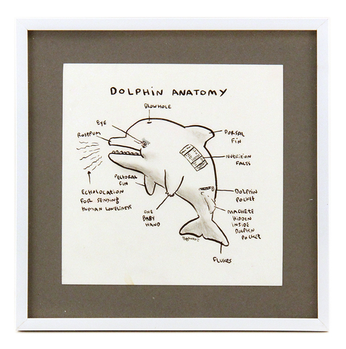 Dolphin Anatomy, Megan Nicole Dong