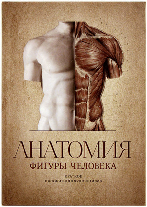 Anatomy of Human Figure: The Guide for Artists