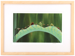 The Leaf Bridge by Tia Kratter (A Bug's Life) - Framed, 1st Edition
